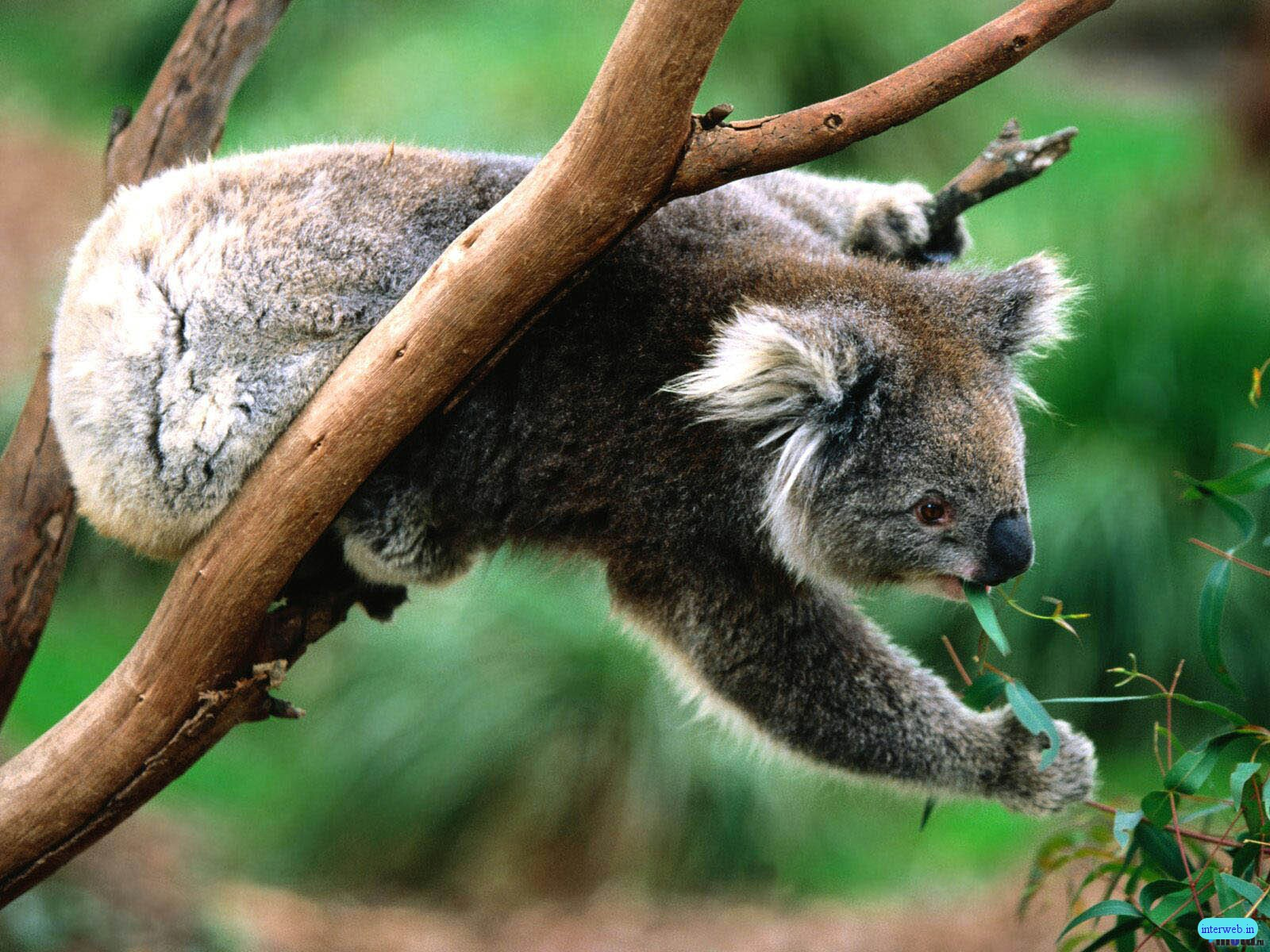 http://3.bp.blogspot.com/-V9WDecZYzYs/UHB5akdSw7I/AAAAAAAAG0s/RgOwRTPSQ-M/s1600/animals+Images.jpg