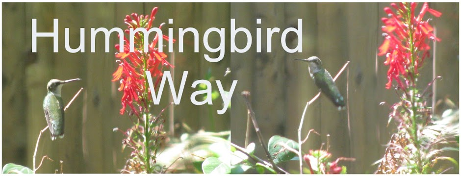 Hummingbird Way
