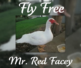We will miss your antics and adventures, Mr. Red Facey.