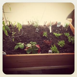 Organic Urban Garden