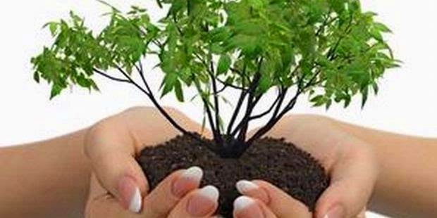 Mahasiwa Iprija Tanam 1.000 Pohon di Cilangkap