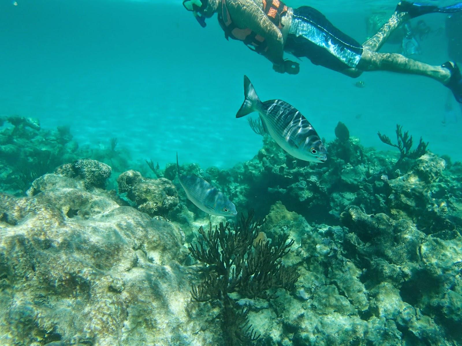 Akumal reef