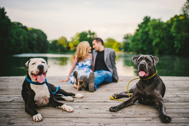 http://theoberports.com/six-tips-for-including-your-dog-in-your-engagement-shoot/