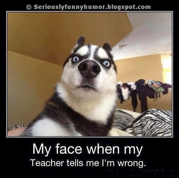 Funny Dog Faces Memes Dog Face Funny Meme my Face