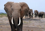 Stop cruel practices in all forms. Don't buy Ivory products!