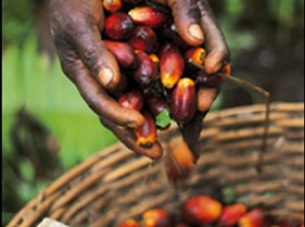 Read this: Palm Oil Business in Nigeria
