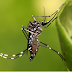 Dengue: La Manzana 42, la manzana de la discordia