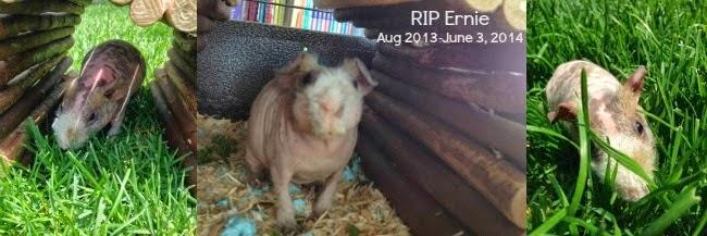 http://www.foreverinmomgenes.com/2014/06/when-pet-dies.html
