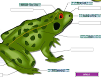 e-Learning Belajar Anatomi Katak
