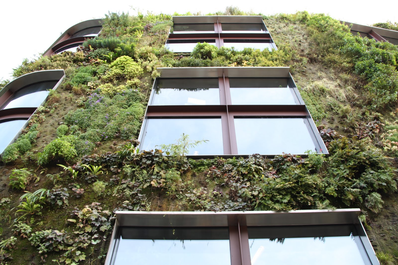 Growing Walls Vertical Gardens The Work Patrick Blanc