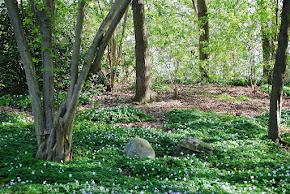 Läs min första artikel om Naturträdgård på Odla.nu