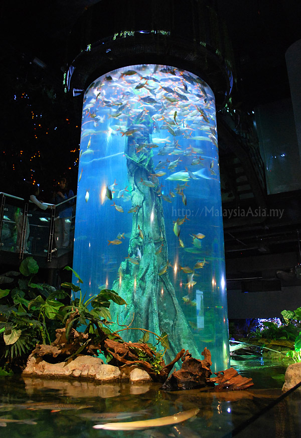 moments at aquaria klcc Lovers of aquatic life will enjoy a visit to this gigantic aquarium, situated at the basement of the kuala lumpur convention centre reputed to be one of the largest aquariums in the world aquaria klcc admission ticket (e-ticket) aquaria klcc admission ticket (e-ticket.