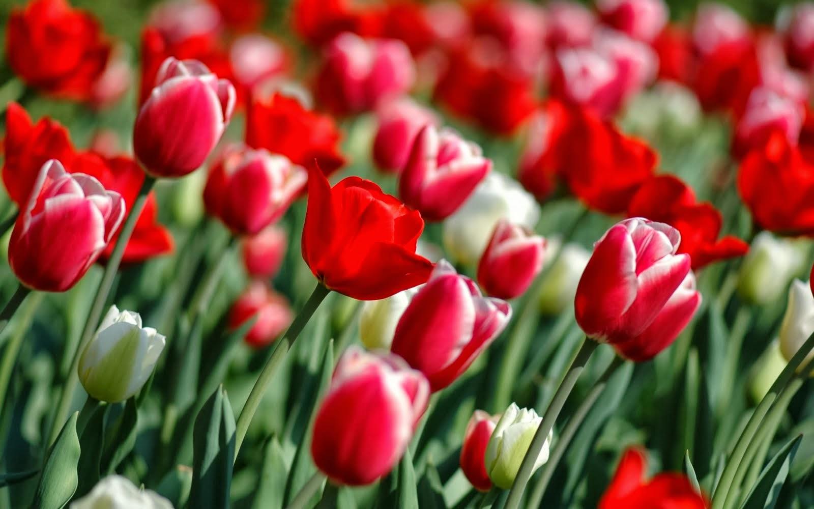 Gambar Bunga — Download Gambar Bunga dan Tanaman Gratis