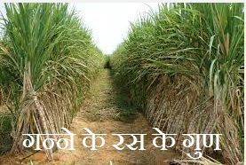 गन्ने से स्वास्थ्य लाभ | Health Benefits of Sugar Cane in Hindi