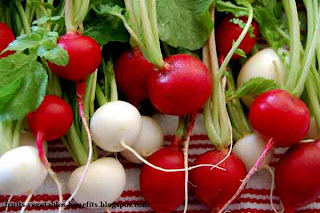 benefits_of_eating_radishes_fruits-vegetables-benefits.blogspot.com(benefits_of_eating_radishes_1)