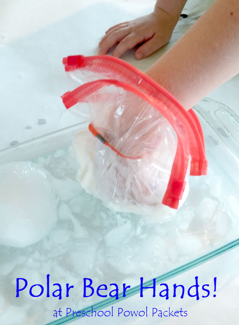 polar bear science experiment stem preschool powol packets