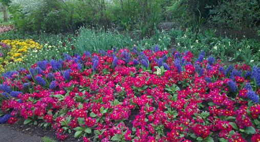 http://utesmile.wordpress.com/2014/05/08/a-walk-in-the-park/