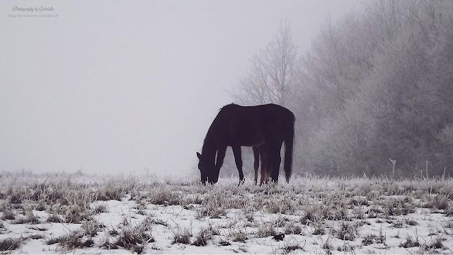 snow nature mudrovce horses winter