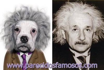 Perrito con Albert Einstein