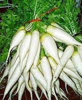 sayur lobak, lobak putih