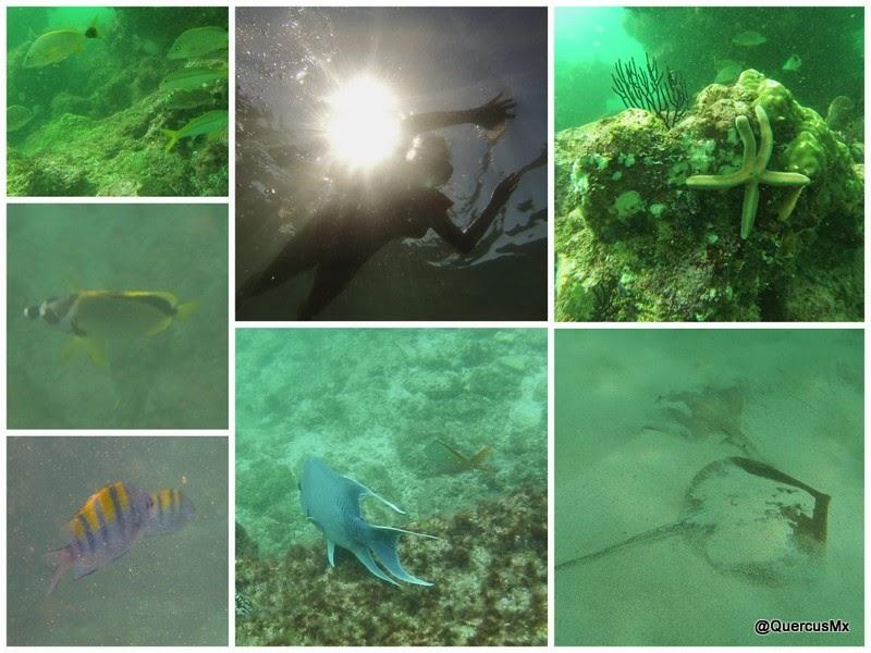 Buceo en las Islas Marietas Mantarraya, Estrallas de mar y otros peces