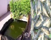 زراعة اسطح المنازل أسماك