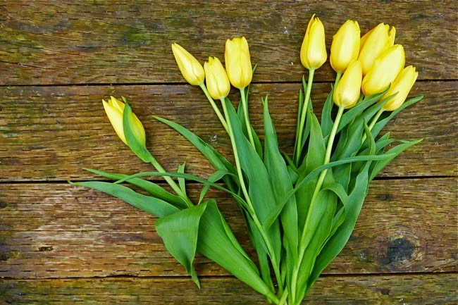 a springtime greeting and hello again, tulips, yellow tulips, spring flowers