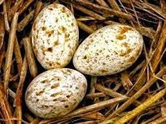 Huevos de Sevilla