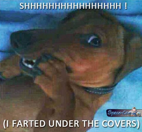 funny dog picture humor