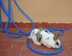 Golpe de calor en conejos enanos