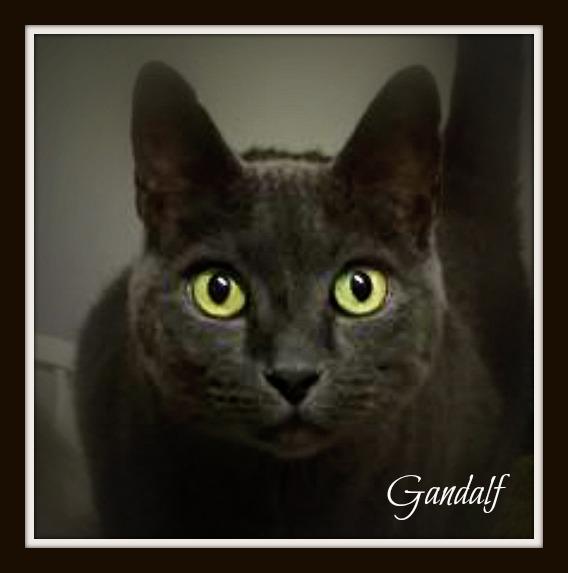 RIP GANDALF
