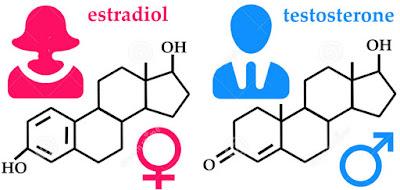 hormon wanita  macam-macam hormon,  pengertian hormon,  hormon pada manusia