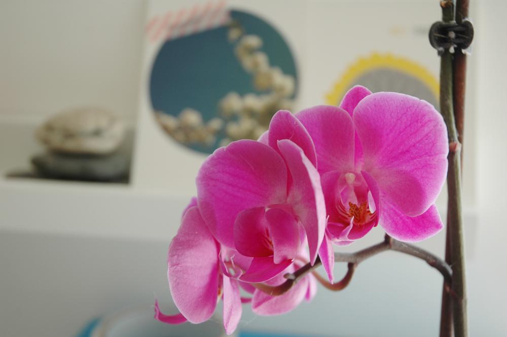 littlegreenshed workspace orchid
