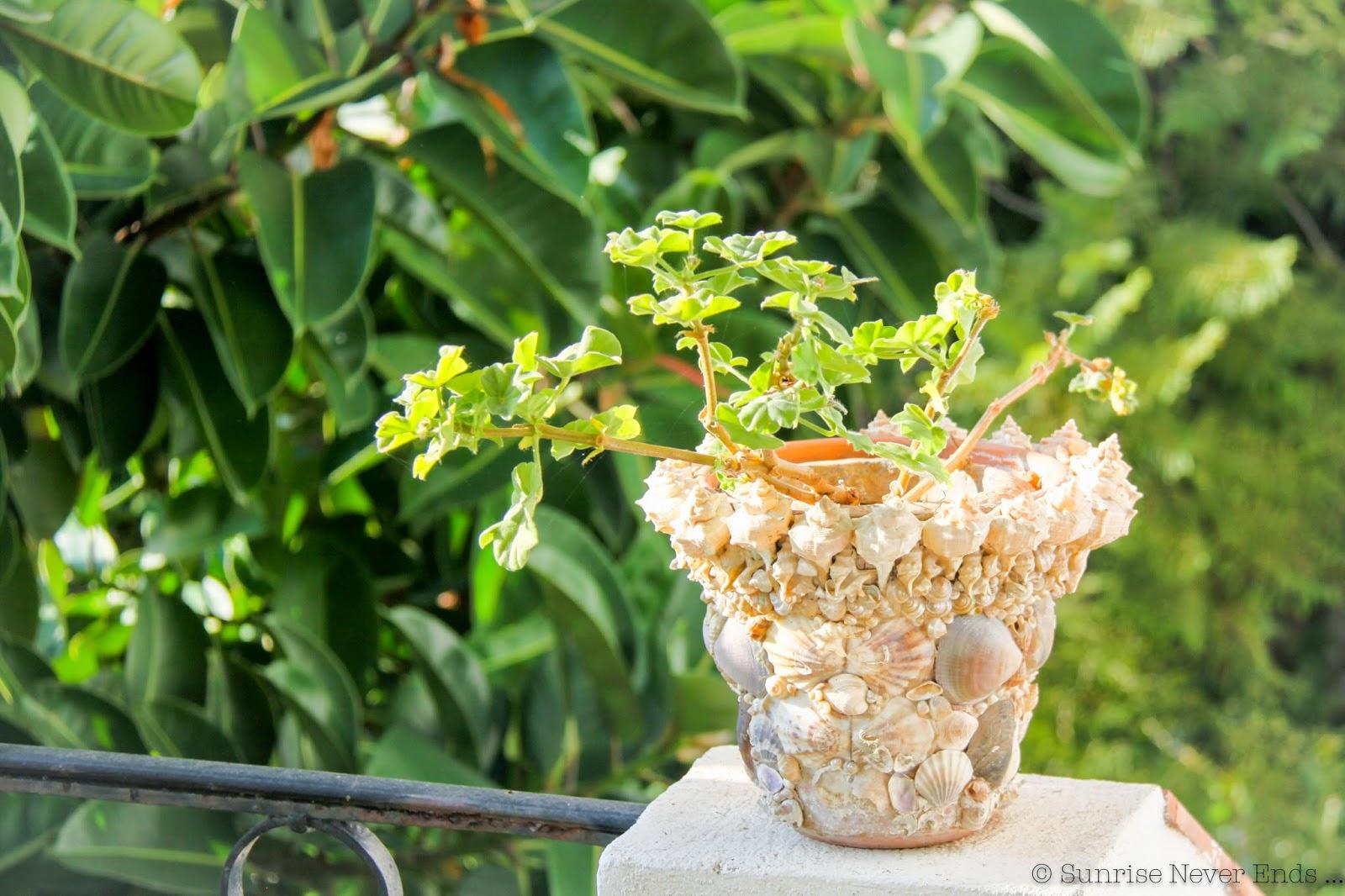 coquillages,géranium,pot de fleur,santo sospir,saint jean cap ferrat,hello riviera