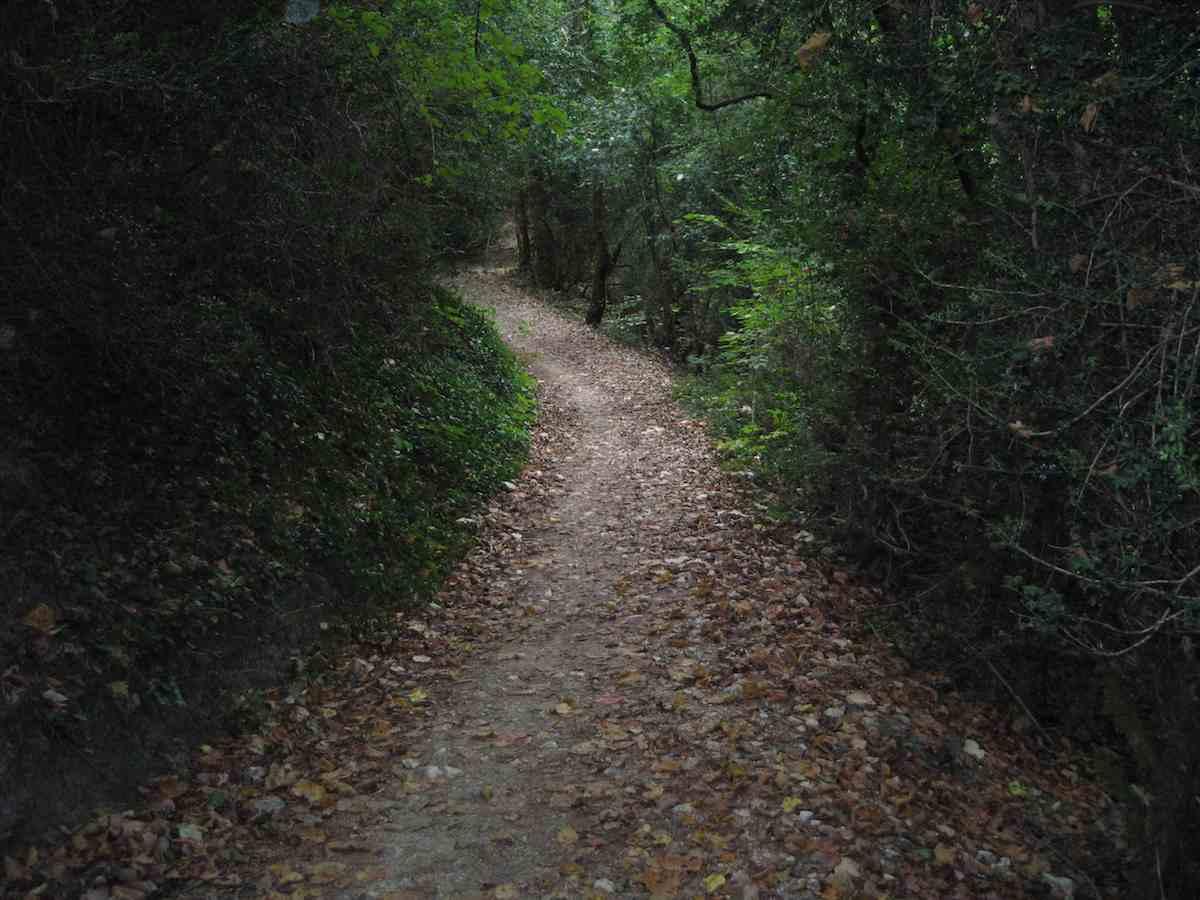 El camino de Santiago y su Magia : Mi Rincón Mágico