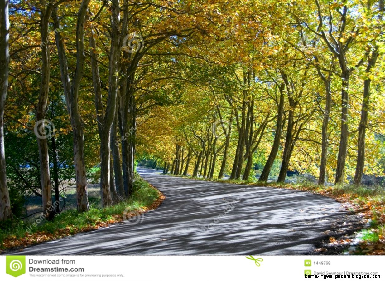 Autumn Tunnel Of Trees   Road Bend Royalty Free Stock Photos