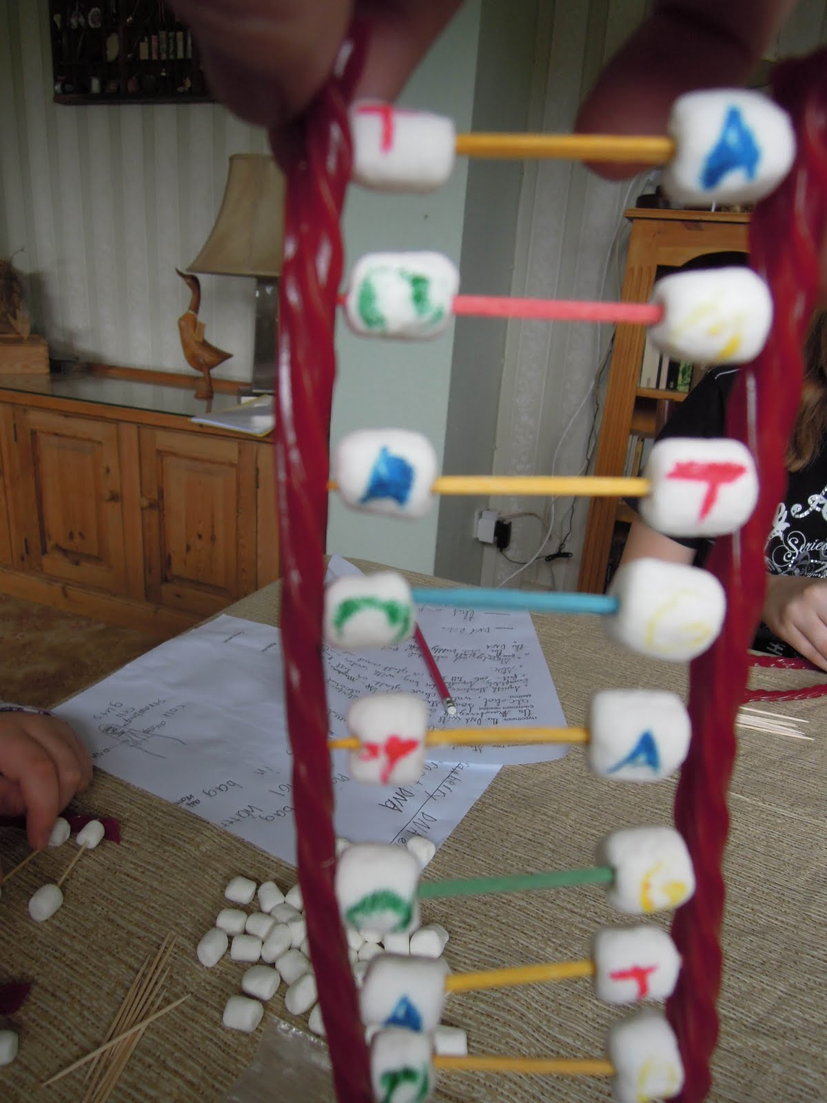how to build a 3d double helix dna model