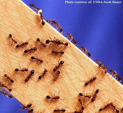 Carpenter ants house