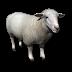 İngilizce Koyun tanıtımı -İngilizce Koyunun özellikleri