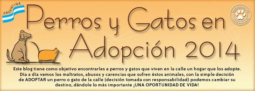 Perros y Gatos en adopción 2014