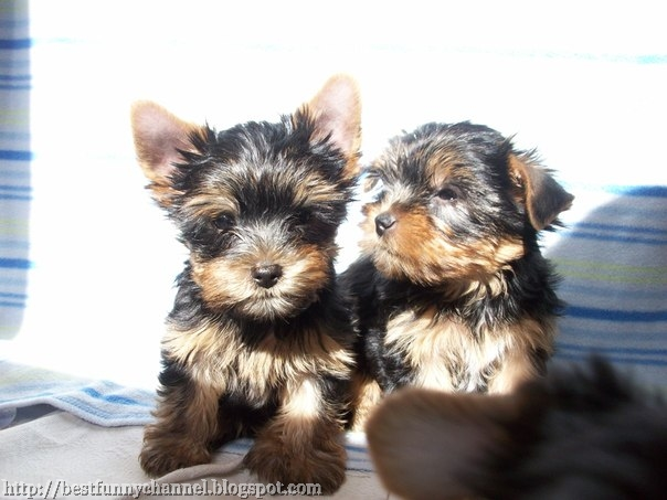 Two sweet puppies.