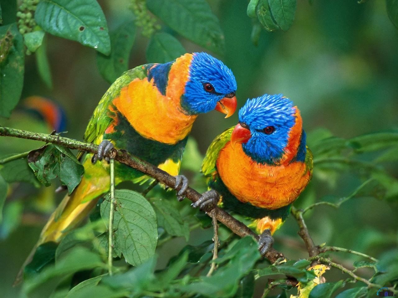 cool animals pictures: beautiful colorful birds new fresh background