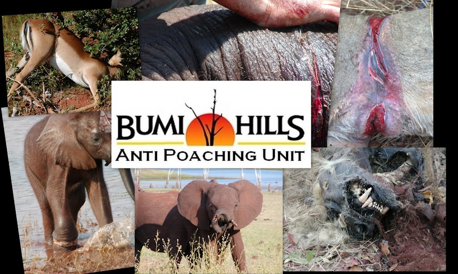 Bumi Hills Anti Poaching Unit