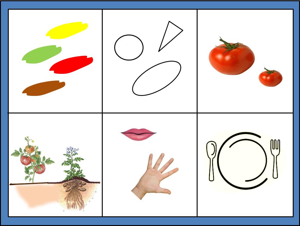 3. Уметь описывать овощи по