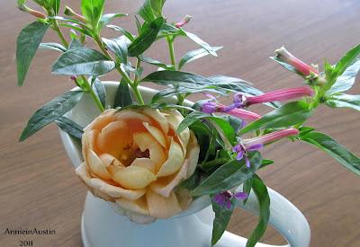 Annieinaustin minirose and cuphea vase