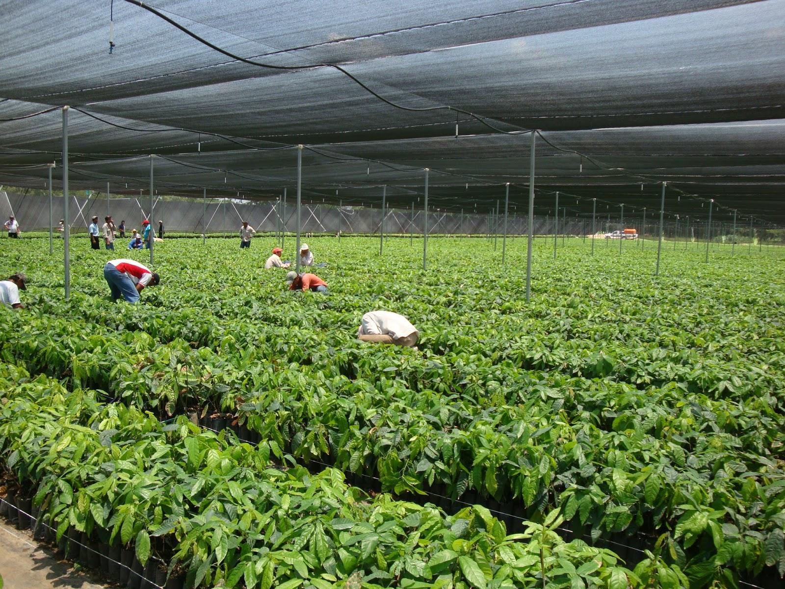 Invernaderos for Plantas para invernadero