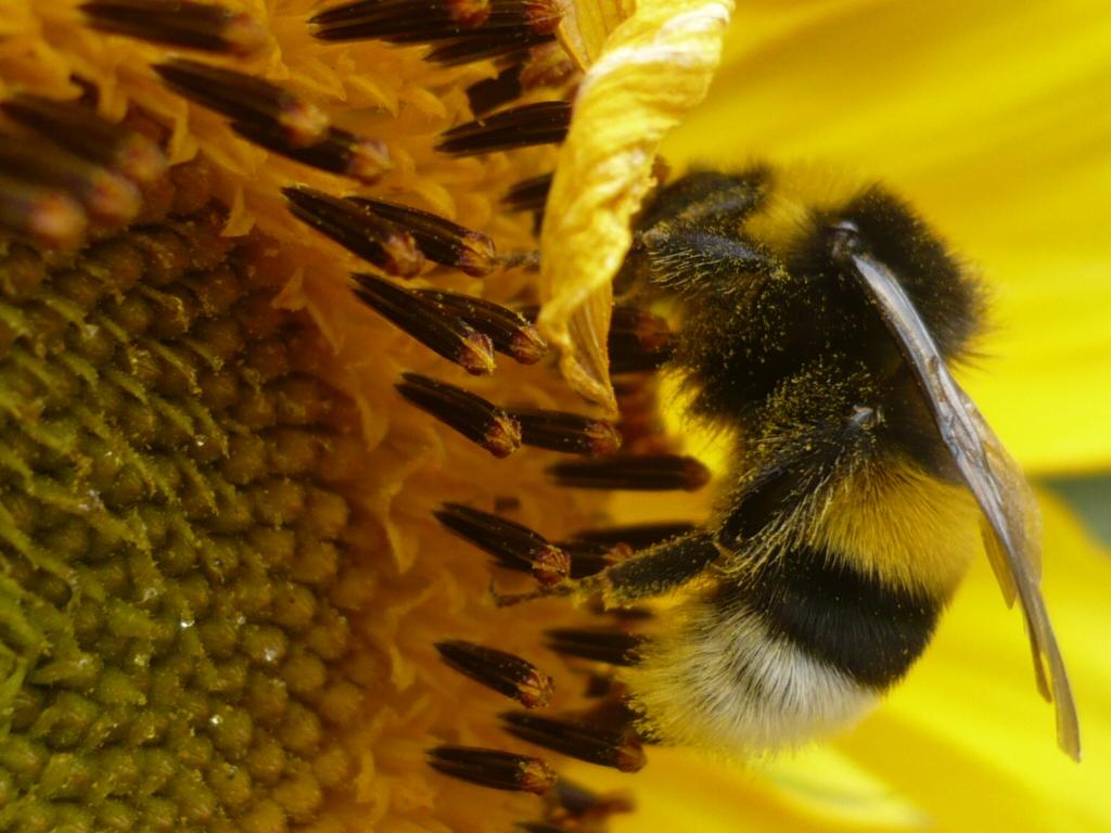 Netal il meglio dall 39 italia diversi tipi di miele - Diversi tipi di api ...