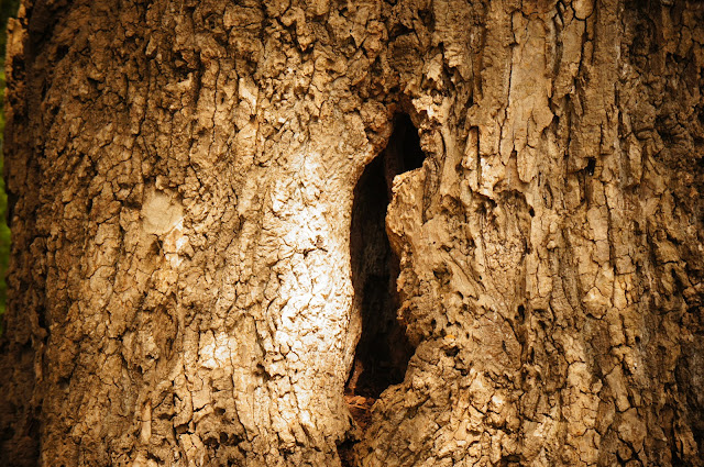 tree trunk with hole and bark
