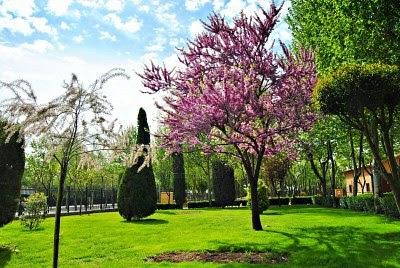 arte y jardiner a rboles ornamentales