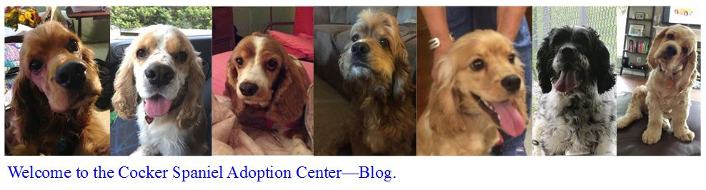 Cocker Spaniel Adoption Center Blog